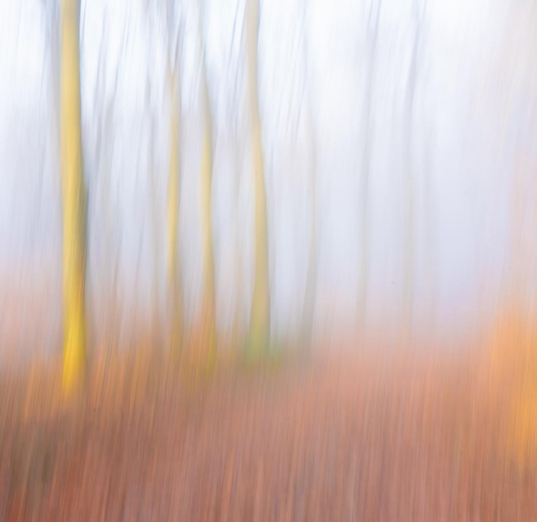 Bäume/Wald