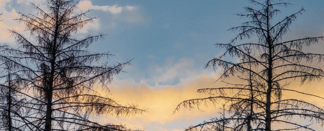 …. der Wald stirbt ….